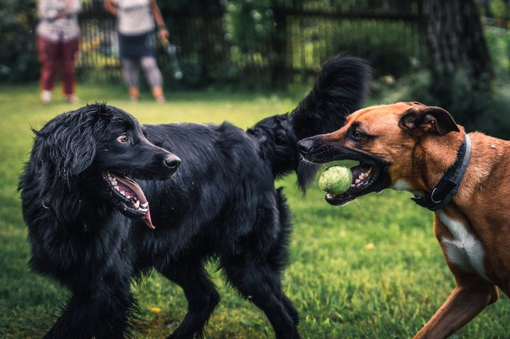 Episcopaws! Weekly Gatherings at the Shirlington Dog Park